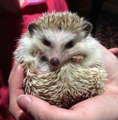 #wewantahedgehog